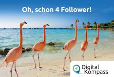 "Fünf Flamingos hintereinander: ""Oh, schon 4 Follower!"""